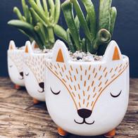 Feeling foxy... (£8 planted) . .  #grow