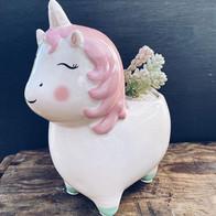 Unicorn love 🦄🦄🦄... (planted £18 pot