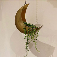 Moon planter with string of pearls... (£