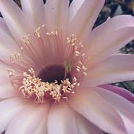 In bloom... . . .  #girlboss #girlbossli
