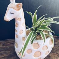 Giraffe planter 🦒... (Planted £20 pot o
