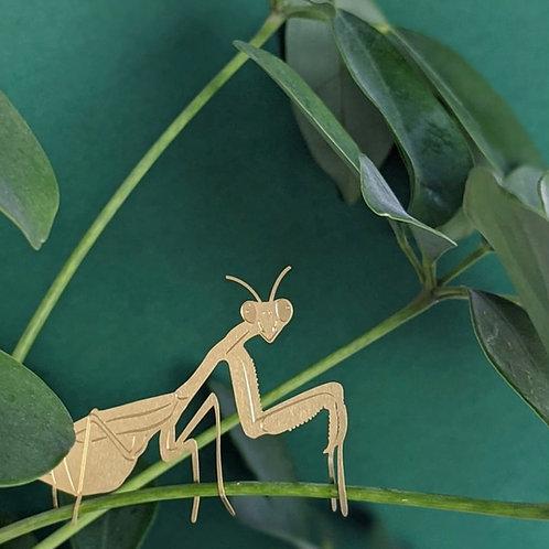 Plant animal - Praying Mantis