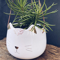 🐱🐱🐱 (Planted £15 pot only £10) . . #m
