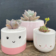 Pretty in pink (Planted: Pink £20, face