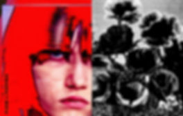 poppies 5.jpg