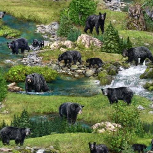 Robert Kaufmen - Coast to Coast - Bears