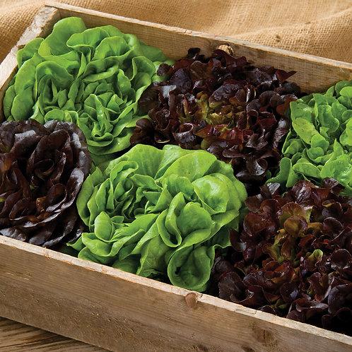 Pelleted Lettuce Seed Mix
