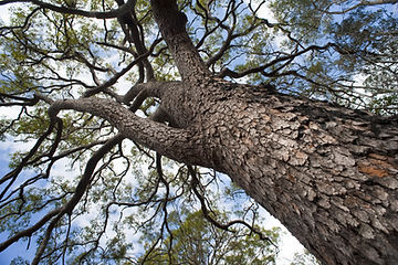 tree pruning Auckland
