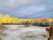 Cathy V's orchard photo.jpg