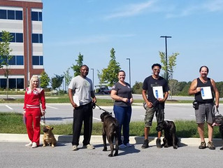 6 dogs bred by us passed their CGC and TKN! Thanks to our amazing owners!