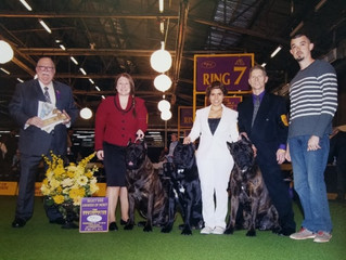 WOW! Another Westminster NY show with great results for our kennel!