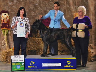 CH Black Pearl Crembo CGC TT wins OH  BEST IN SHOW !!!