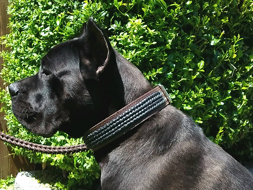 Brown leather collar with double black braid