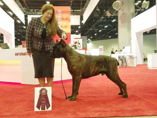 Amazing results from AKC National show in Orlando!!