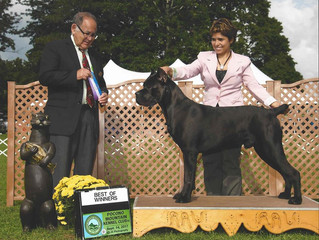 Ivy League Kratos wins 2 majors going Best Of Winners first 2 days of the show at Macungie, PA. Big