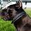 Thumbnail: Black Leather Collar