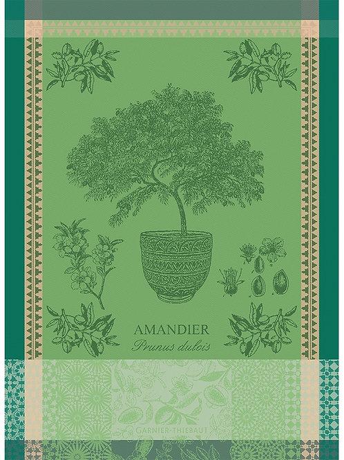 Garnier-Thiebaut - Amandier En Pot Vert