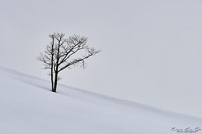 Voyage au Japon - Hokkaido