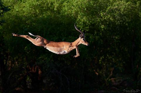 Voyage photo au Zimbabwe - parc de Matusadona