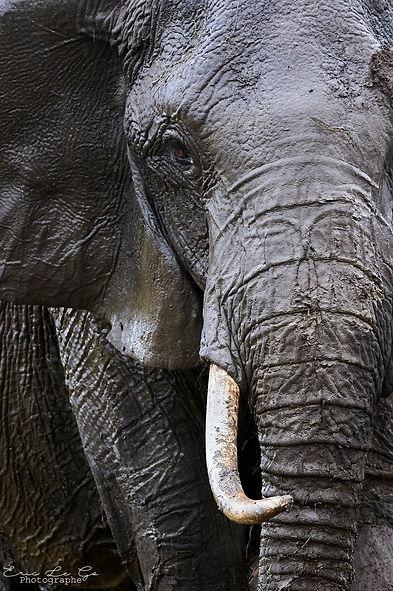 Eric Le Go - Kenya 2014 - _TES7108.jpg