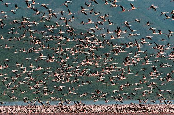 Voyage au Kenya - lac Bogoria