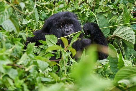 Voyage photo au Rwanda