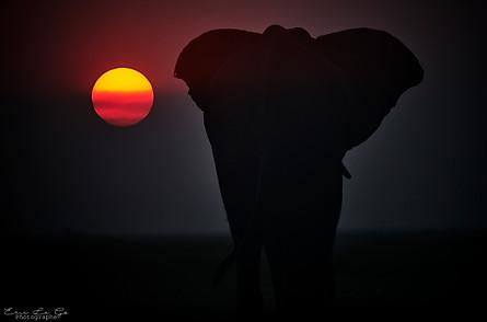 Voyage au Botswana - au bord de la riviere Chobe