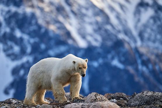 Voyage photo au Svalbard