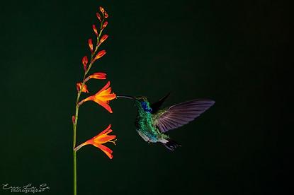 Voyage photo au Costa Rica
