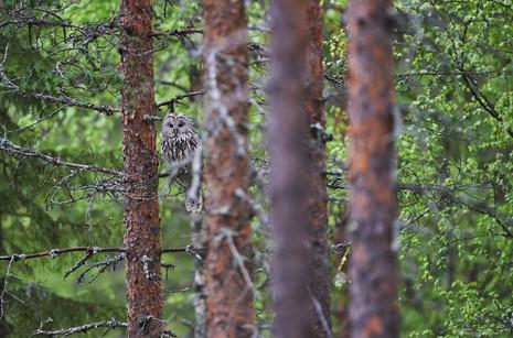 Voyage photo en Finlande