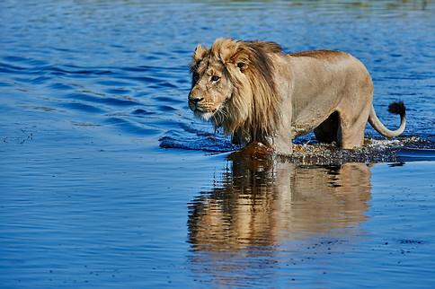 Voyage photo au Botswana