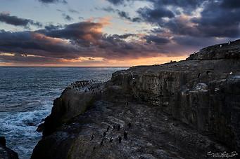 Voyage aux Falkland