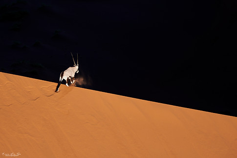 Voyage photo en Namibie