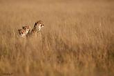 Voyage au Botswana - Kalahari central