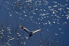 Voyage au Botswana - Delta de l'Okavango