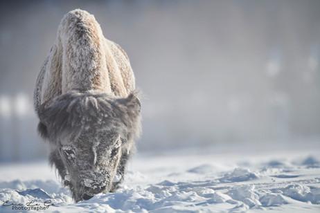 Voyage photo dans le parc de Yellowstone
