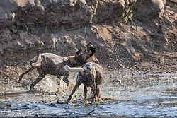Voyage photo au Zimbabwe - Parc de Mana Pools