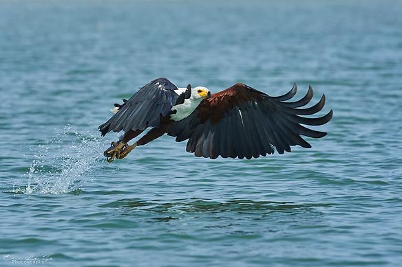 Voyage au Kenya - lac Baringo