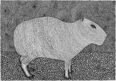 Capybara%20jpg_edited.jpg