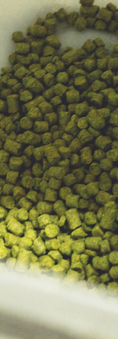 16 - caatinga rocks-117.jpg