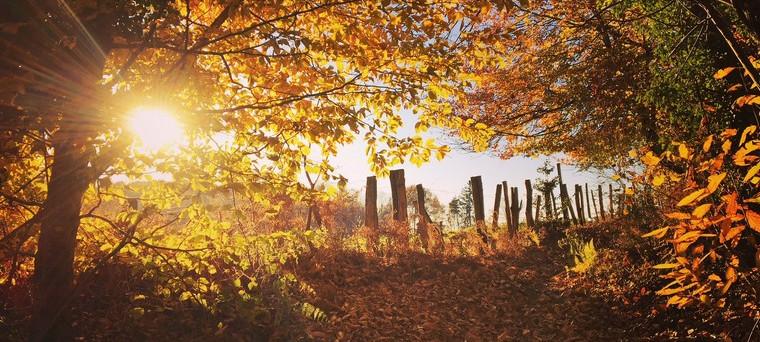 chemin_automne_760.jpg