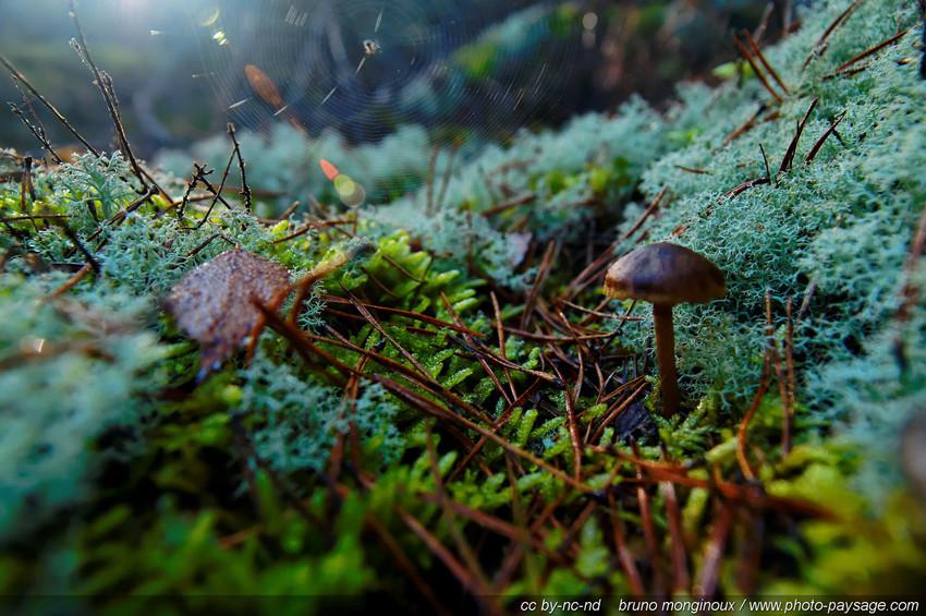 Champignon-mousse-lichen-toile_d_araigne