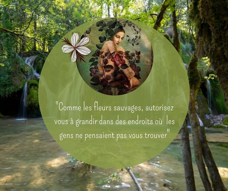 Rose Photo Fleur Publication Facebook.pn
