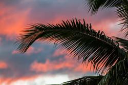 RHUM BA, Fiji