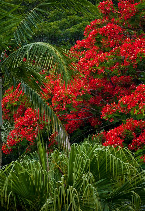 VANUATU CHRISTMAS TREE