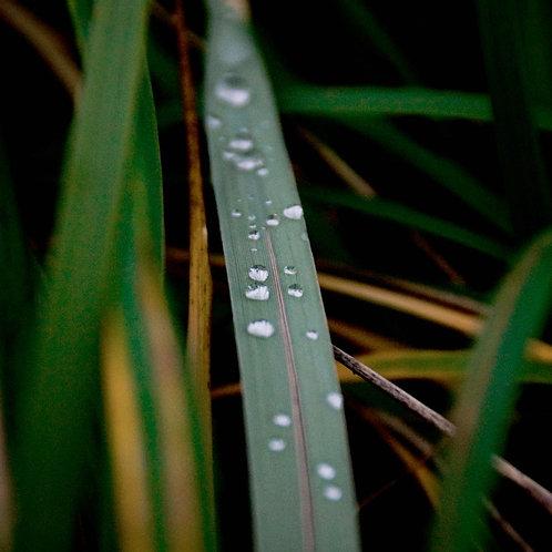 Fresh Rain - 5.5oz Soy