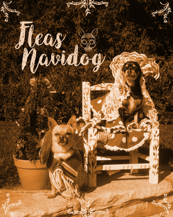 FleasNavidog-After
