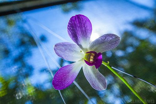 Fijian Orchid - 5.5oz Soy