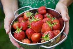 strawberries in hands