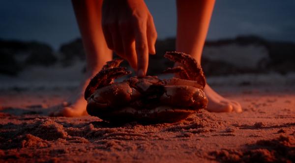 Krabbendans crabdance Malu Janssen.png